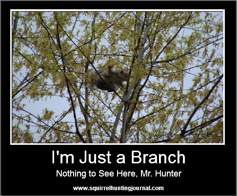 Squirrel Hunting Humor - I'm just a branch