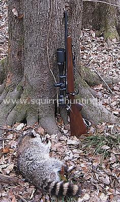 Raccoon 12-31-2012