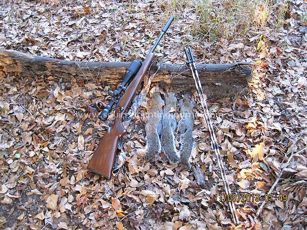 First 3 squirrels 11-09-13