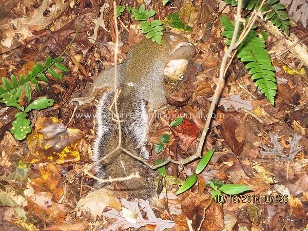 10-18-14 First Squirrel