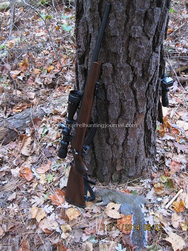 11-11-14 Squirrel #1