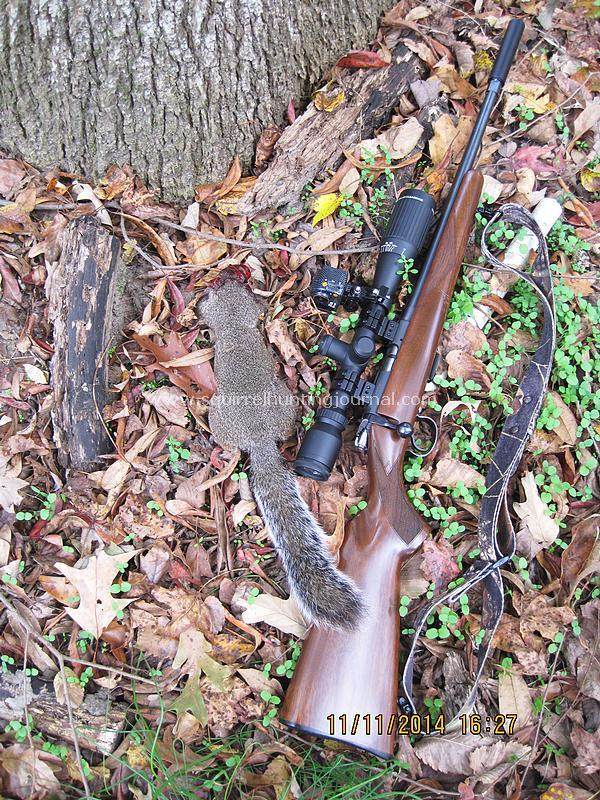 11-11-14 Squirrel #2