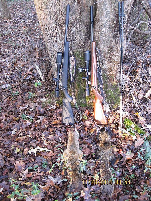 11-28-14 Fox Squirrel Double2