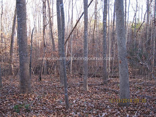 12-13-14 Squirrel land 1