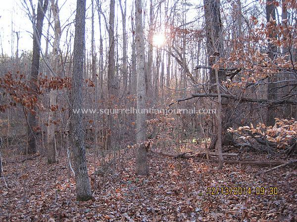 12-13-14 Squirrel land 2